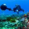 Google mapeia mundo subaquático em Fernando de Noronha